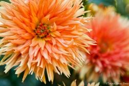 Flores-16