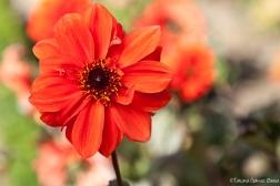 Flores-21