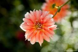 Flores-7