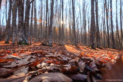 Alfombra de otoño